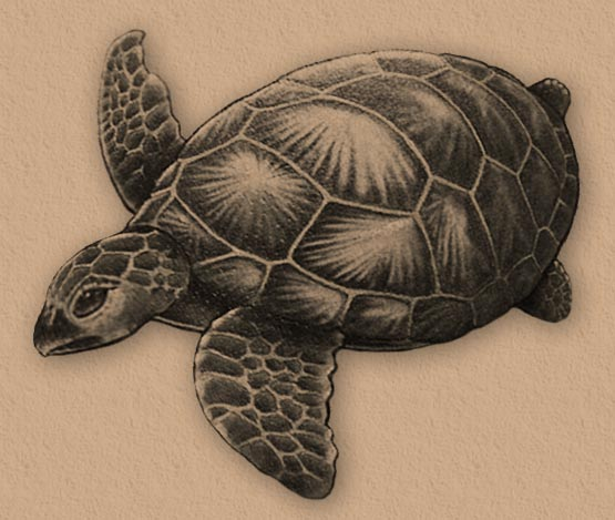 Free turtle tattoo designs